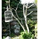 Vorstschade aan vijgenboom van Gert Hofsink